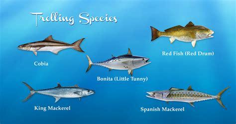 fish species catfish gulf mexico alabama coast fishing mackerel mexican inshore spanish bay charts etc cobia drum king