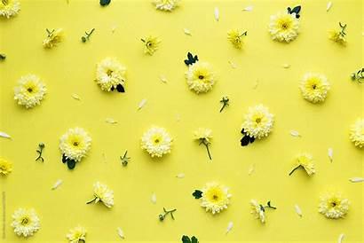 Flower Aesthetic Yellow Backgrounds Pastel Desktop Laptop