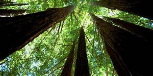 Places to See Big Trees | Visit California