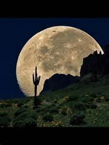 Cactus Moon Tucson