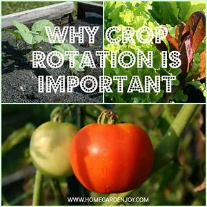 Why Crop Rotation Is Important