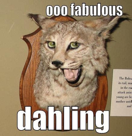 Fabulous Memes - quim cat quickmeme