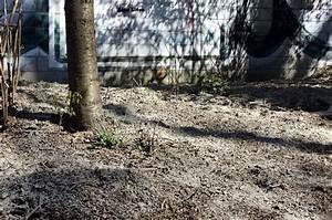 Große Baumwunden Versorgen : waldgarten 10 eindr cke aus dem vergangenen jahr ~ Lizthompson.info Haus und Dekorationen