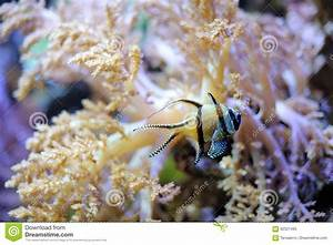 Tropical Striped Little Fish Stock Image - Image: 92521485