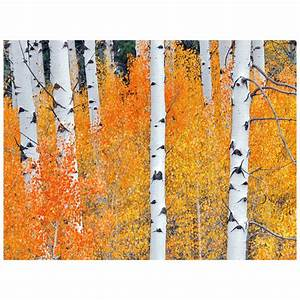 fall aspen tree ii indoor outdoor canvas art With kitchen cabinets lowes with aspen trees wall art