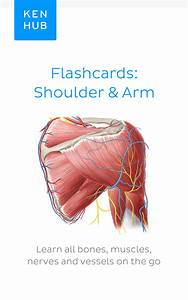 One Of The Most Frequent Exam Topics   Learn More About The  Muscles Of This Region  Including