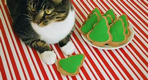 Tasty Treats for Kitty This Holiday • hauspanther