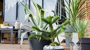 Comment Disposer Des Pots Sur Une Terrasse : poterie jardini re et bac fleurs lequel choisir ~ Melissatoandfro.com Idées de Décoration