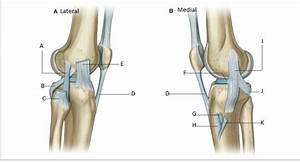 Flashcards - Knee Joint