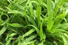 Rasen Düngen Regen by Vertikutieren Gegen Unkraut 187 So Machen Sie Den Pflanzen