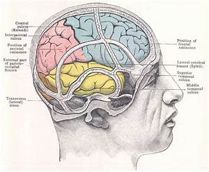 Diagrams Human Head Brain Diagram