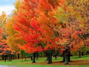 trees quot r quot us inc november 2013