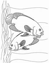 Fish Coloring Pages Aquarium Printable Tropical Oscar Oscars Sheet Oasis Realistic Colouring Sheets Easy Tank Young Difficult Kid Swordfish Horses sketch template