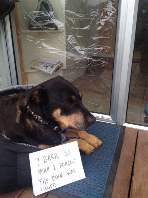 misbehaved pets  adorably ashamed article
