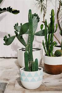 Pot A Cactus : summer essentials cactus pop scott pot the style files greens gardens indoor ~ Farleysfitness.com Idées de Décoration