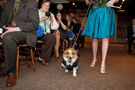 pictures of ring bearer dogs