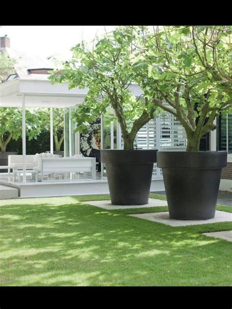 large potted trees gorgeous garden
