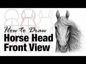 How to Draw a Horse Head Front View - YouTube