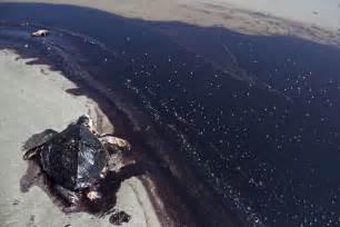 Oil Spill Photos