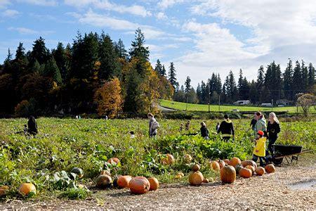 Pumpkin Patch Near Tacoma Washington by Internetsimply Blog