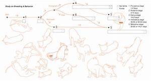 How Do Cats Mate Diagram