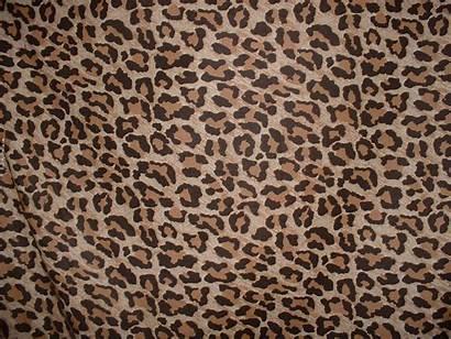 Leopard Background Backgrounds Pimp Animal Desktop Profile