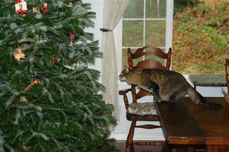 repel cat christmas tree 10 ways to cat proof your tree archive a cat a day myth and culture