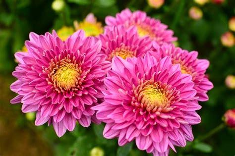 Japan: ความหมายของดอกไม้ (ในแบบฉบับญี่ปุ่น)