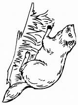 Beaver Coloring Pages Printable Animal Print Animals Recommended sketch template