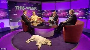 Andrew Neil's dog 'Miss Molly' given free rein in BBC This ...