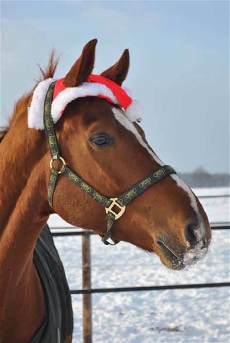 auch pferde feiern weihnachten burgdorf myheimatde