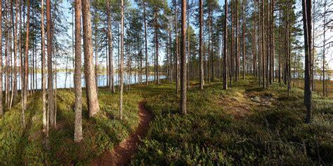 landscape, Forest, Path, Dirt Road Wallpapers HD / Desktop ...