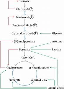 Alcohol Metabolism Chart 生酮飲食
