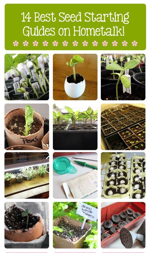 Best 25+ Seed Starting Ideas On Pinterest Greenhouse