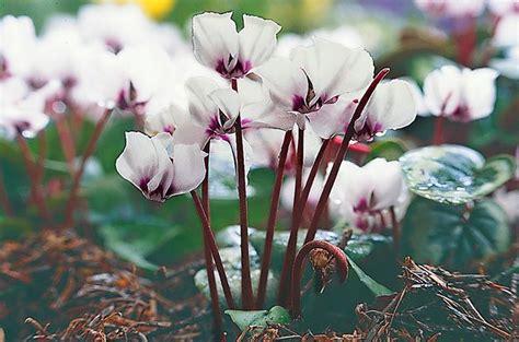 top  winter bloomers   flower garden birds