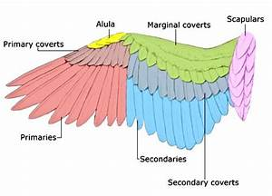 19 Best Anatomy  Wings Images On Pinterest