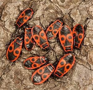Kleine Fliegen In Der Erde : insekten sachsen ~ Frokenaadalensverden.com Haus und Dekorationen