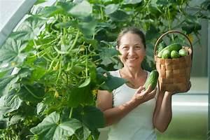 Wann Balkon Bepflanzen : salatgurken pflanzen wo wann wie geht 39 s ~ Frokenaadalensverden.com Haus und Dekorationen