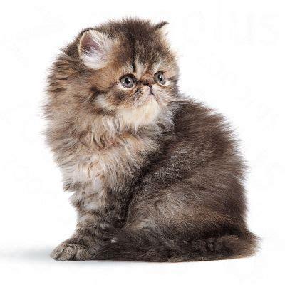 Royal Canin Persian Kitten  Free P&p On Orders £29+ At
