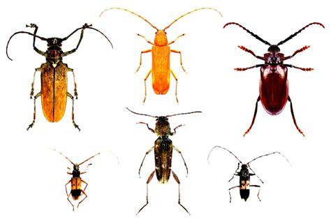 formiche volanti in casa insetti dei tessuti