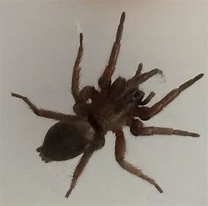 Spiders at Spiderzrule