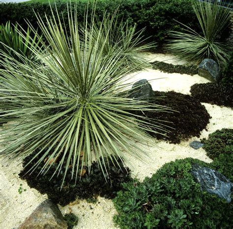 plante en pot exterieur plein soleil yucca planter et tailler ooreka