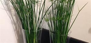 Plante D Extérieur En Pot : plante exterieur haute en pot pivoine etc ~ Teatrodelosmanantiales.com Idées de Décoration