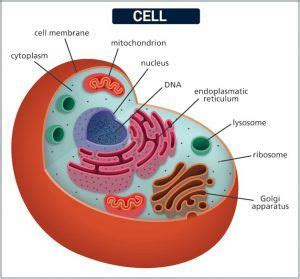 cell theory definition  early observations