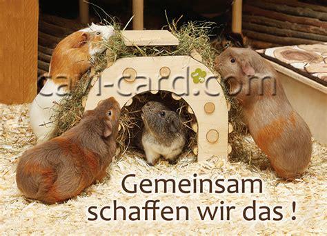 meerschweinchen postkarte gemeinsam schaffen wir das