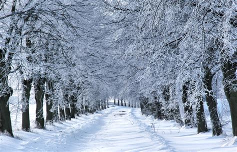 winterw onderland homebargains winter package visit ct