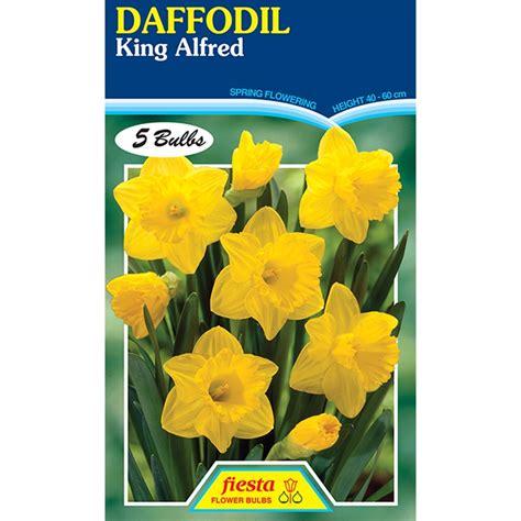 bulb king alfred daffodil 5pk sku 00134130 bunnings