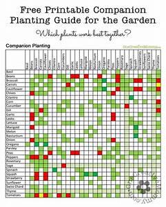 Build A Comparison Chart