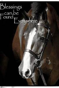 17 Best images about Horse Quotes♥ on Pinterest ...