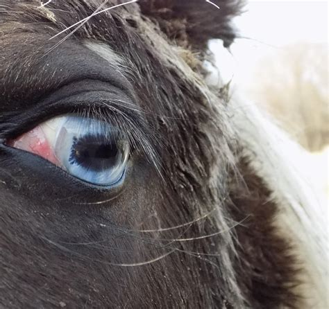 fascinated eyed pupils comment